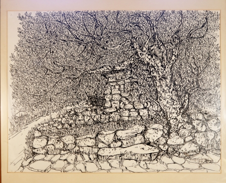 Ash tree Pen and ink 1960s